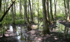 Ebenezer Swamp and Ecological Preserve